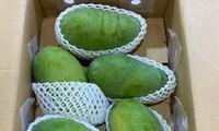 Vietnam promotes green mangos in Australia
