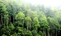 Đến năm 2020 tỷ lệ che phủ rừng toàn quốc đạt 42%