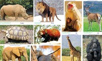 Hợp tác bảo vệ động vật hoang dã trong ASEAN