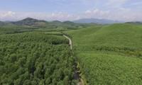 Gần 4.200 ha rừng được cấp chứng chỉ rừng FSC