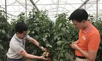 Giá trị xuất khẩu rau quả 4 tháng đầu năm của Việt Nam đạt 1,35 tỷ USD