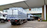 Hơn 13 nghìn tấn quả vải Việt Nam xuất khẩu sang Trung Quốc qua Cửa khẩu Lào Cai