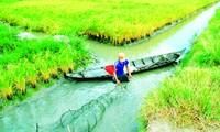 Canh tác tôm - lúa: Mô hình sản xuất hiệu quả và bền vững
