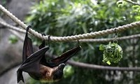 China bat caves need exploring in search for COVID origins, WHO team member says