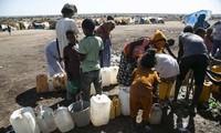 Всемирная продовольственная программа увеличивает продовольственную помощь эфиопскому региону Тигрей