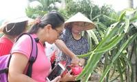 Город Биньтхуан развивает сельский туризм