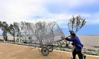 Житель провинции Камау изо всех сил старается защищать прибрежные дамбы на юго-западе страны