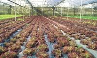 Cần Thơ hợp tác với Hà Lan phát triển nông nghiệp công nghệ cao