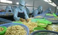 Ngành điều Việt Nam đặt mục tiêu xuất khẩu 4 tỷ USD trong năm 2020