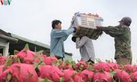 Nông sản Việt nhắm thị trường Ấn Độ