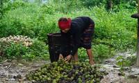 Dự án PROSPER mang màu xanh trù phú cho núi rừng Quảng Trị
