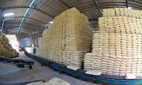 Giá gạo xuất khẩu Việt Nam vươn lên dẫn đầu thế giới