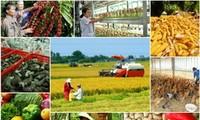 Премьер СРВ приказал активизировать реструктуризацию сельского хозяйства