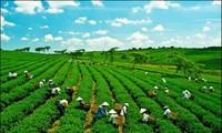 ВБ окажет СРВ поддержку в стимулировании «зеленого роста» и борьбе с изменением климата