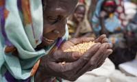 Мировое сообщество призвало активизировать сотрудничество в сфере продовольственной безопасности