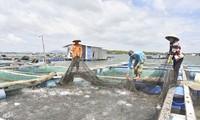 Развитие модели аквакультуры в Бариа-Вунгтау