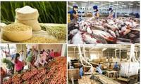 Преодолев трудности, Вьетнам достиг высоких темпов роста экспорта сельхозпродукции