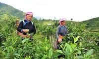 Программа «У каждой общины своя продукция» в провинции Лаокай