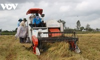 Вьетнамский рис пользуется спросом на рынках с высокими требованиями