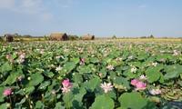 Повышение стоимости продуктов из лотоса провинции Донгтхап