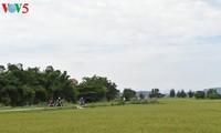 日本媒体:越南与日本在多个领域开展合作