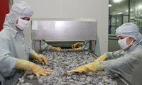 恢复虾产品出口