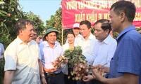 海阳省向新加坡、美国、澳大利亚出口首批荔枝