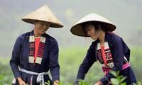 រក្សាលក្ខណៈស្រស់ស្អាតនៃសម្លៀកបំពាក់របស់បងប្អូនជនជាតិ Cao Lan ខេត្ត Quang Ninh