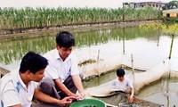 Ứng dụng tiến bộ kỹ thuật sản xuất giống cá lăng chấm bằng phương pháp sinh sản nhân tạo