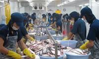 Chính sách bảo hộ nông nghiệp của Mỹ gây khó cho xuất khẩu cá tra của Việt Nam