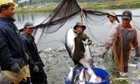 VASEP kêu gọi DOC công bằng khi áp thuế với cá tra Việt Nam