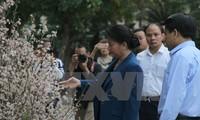 Chủ tịch Quốc hội Nguyễn Thị Kim Ngân tham quan triển lãm hoa anh đào tại Hà Nội