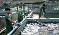 Khai mạc Triển lãm quốc tế về ngành nuôi trồng thủy sản Aquaculture Việt Nam 2017