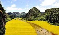 """Ninh Bình dừng tổ chức Tuần Du lịch """"Sắc vàng Tam Cốc - Tràng An"""""""