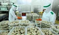 Xuất khẩu nhuyễn thể hai mảnh vỏ của Việt Nam sang EU tăng cao