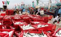 У рыбаков в провинции Биньдинь большой новогодний улов