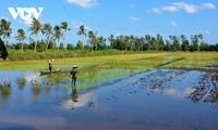 มติที่ 120 ของรัฐบาลมุ่งสู่การพัฒนาเขตที่ราบลุ่มแม่น้ำโขงที่อุดมสมบูรณ์และยั่งยืน