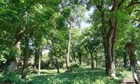 One billion  tree program - for a green Vietnam