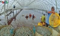 越南企业建议政府与中国谈判加大对中国市场的农产品正贸出口