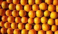 Aldea Cao Phong construye la marca de su naranja