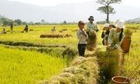 Reajustar acápites para mejorar las áreas rurales vietnamitas