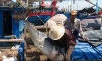 Vietnam promueve la captura sostenible de recursos atuneros