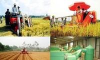 Vietnam impulsa reestructuración de inversiones para el desarrollo agrícola