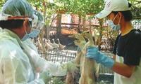 Vietnam se mantiene libre del virus H7N9