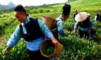 Vietnam entra en el top de los países con mejores logros en reducción de pobreza