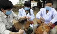 Estados Unidos apoya a Vietnam en la prevención de la gripe aviar
