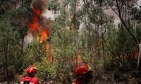 Asciende a 62 las muertes por severo incendio forestal en Portugal