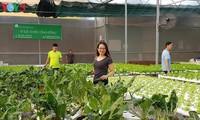 Lam Viet Hoa, una emprendedora ejemplar en agricultura hidropónica