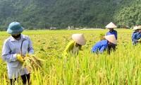 Vietnam ocupa cuarto lugar del Sudeste Asiático en términos de seguridad alimentaria