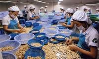 Vietnam apunta a 4 mil millones de dólares de exportaciones de anacardos en 2020